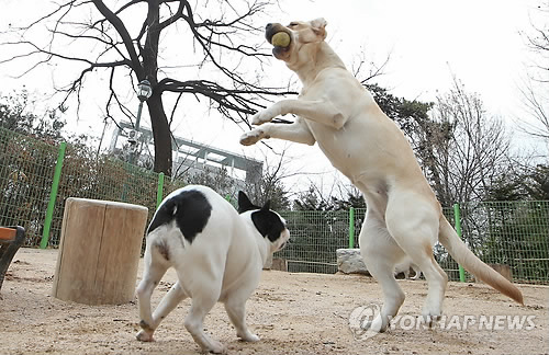 Seoul Re-Opens Two Pet Playgrounds