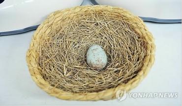 Endangered Ibis Donated by Xi Jinping Fathers Three Newborns in Korea