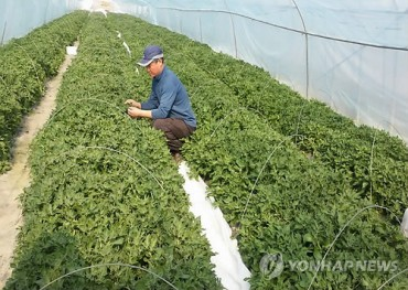 Farmer Grows Ice Plant for First Time in Korea