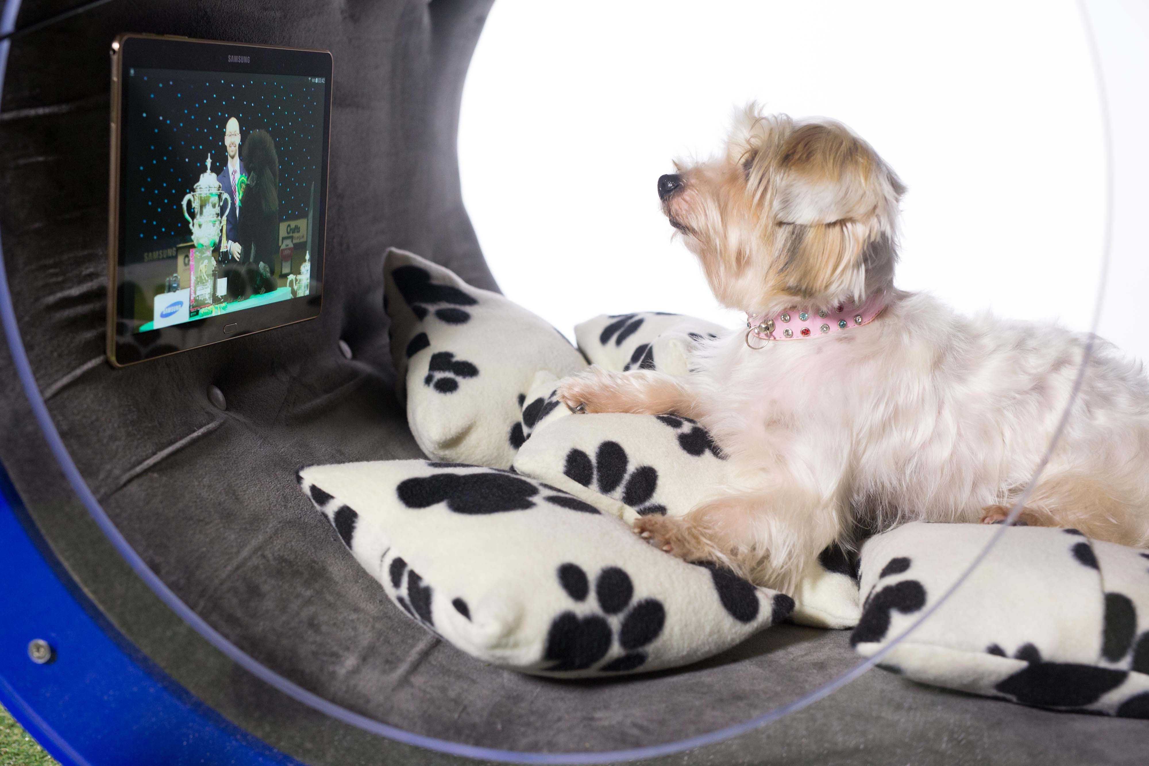 Samsung Dream Doghouse is a smart dog house that puts smart homes to shame, and was developed by more than 10 designers. (image: Samsung Electronics)