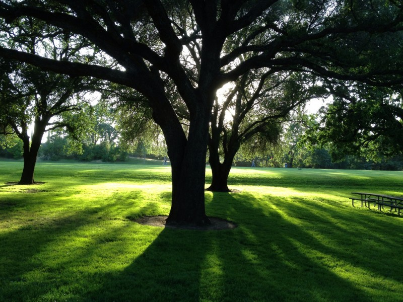 Share Trees with Neighbors Online