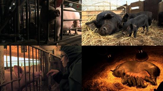 Animal Rights Documentary Coming to Korea on May 7