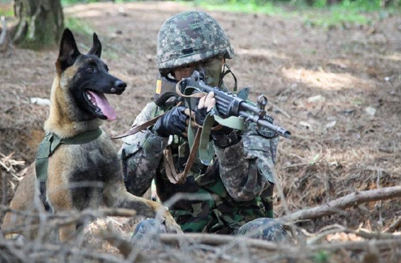 According to a FROKA representative, about 10 discharged military dogs will be put up for adoption every quarter. (image: Defense Media Agency)