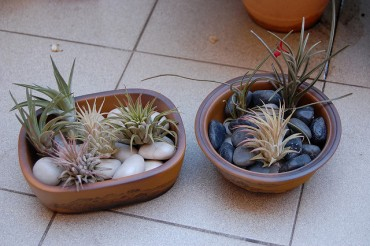 Mini Pots Popular among Citizens Too Tired to Grow Green