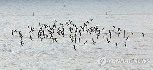 Ecology Classes Offered at Suncheon Bay Every Weekend