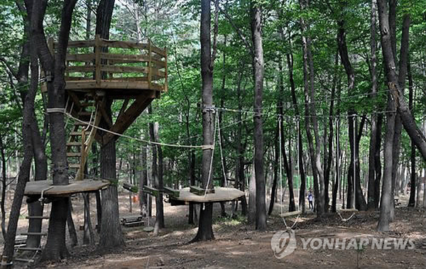Busan's Samjung the Park Suspected of Illegal Logging