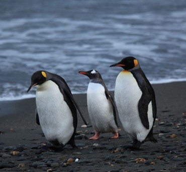 Korean Environmental Activists Call for Help to Stop Fisheries in Antarctica