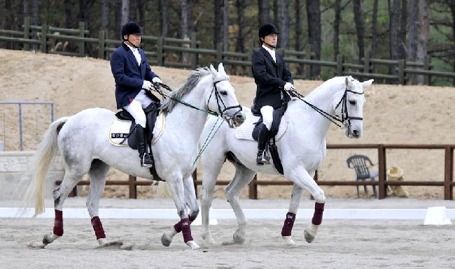 Enjoy Horse Riding at Recreational Forests