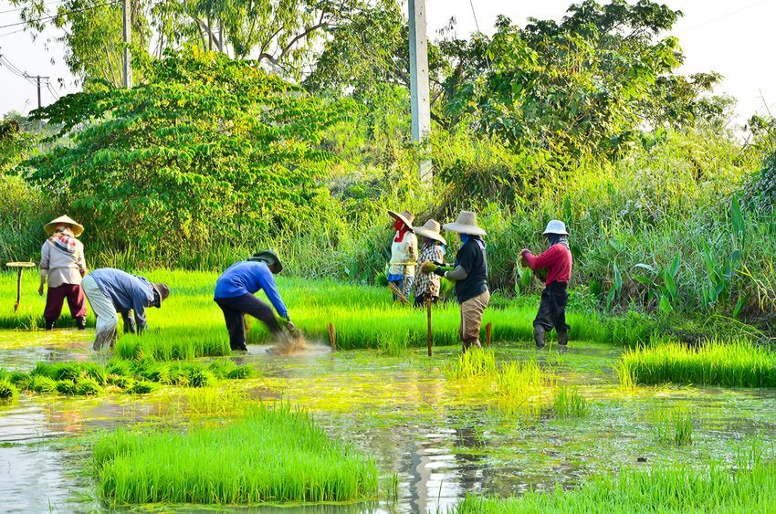 49.7 percent of agricultural and fishery workers earned less than 1 million won per month last year. (image: Korea Bizwire)