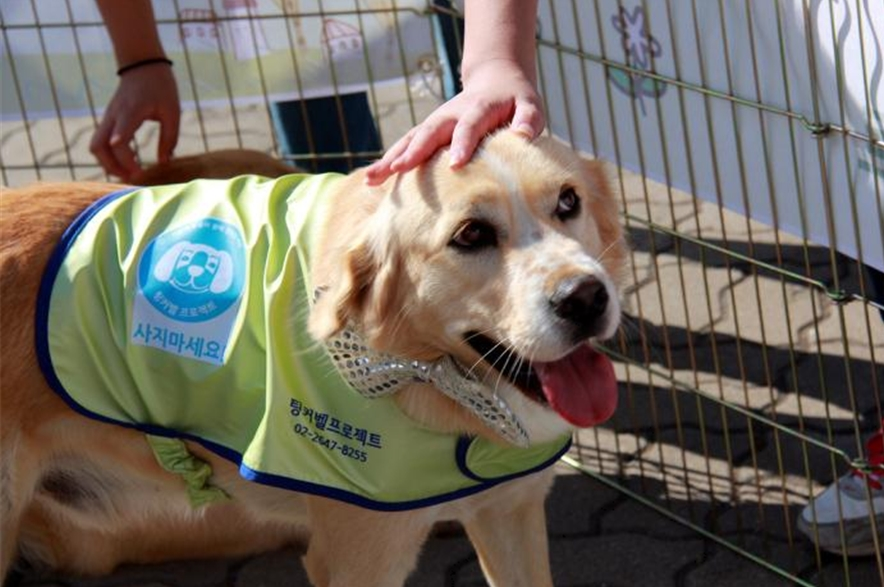 The number of abandoned animals in Seoul decreased 48.7 percent to 9,551 in 2014 from 18,624 in 2010. However, only 29 percent of abandoned animals were adopted. (image: Seoul Metropolitan Office)