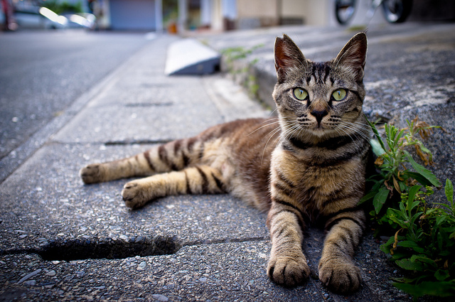 Among the 11,869 deaths, 81 percent of road kills were cats, while 12 percent and 7 percent were dogs and birds & wild animals respectively. (image: Jeff Laitila/flickr)