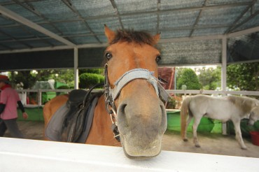 Korean Horse Riders & Breeders Increasing, Equestrian Business Grows to 3 Trillion Won Industry