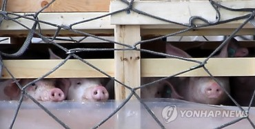 Canadian Pigs Heading to Jeju