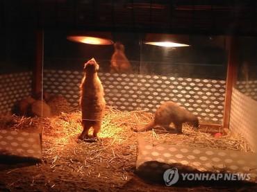 Late Night Operation of Zoo Criticized as Animal Abuse