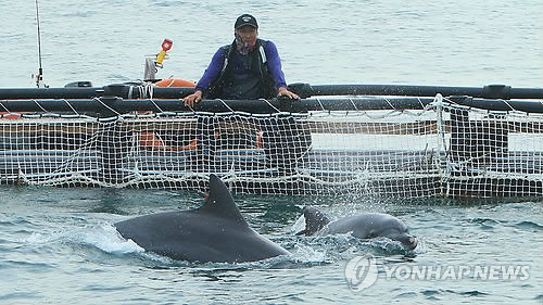 Released Dolphins Successfully Adapt to Jeju Sea, Their Hometown