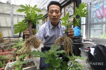 Busan Research Center Develops Method to Harvest Figs Just After 10 Months