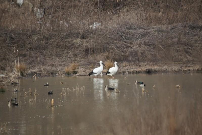 Korean Stork Park Opens on June 9