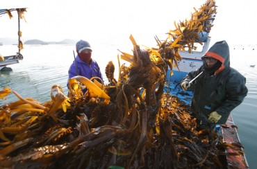 Wando County Designates May 8 as Sea Mustard Day