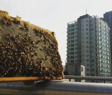 Urban Bee Farming Becoming Popular in Seoul
