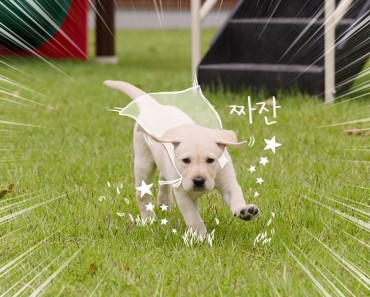 Samsung Insurance Introduces 'Bomi' the Puppy as Friendly Safety Instructor