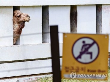 Korean Camels Unnecessarily Isolated from the Public