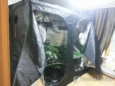 Korean Man Arrested for Massive Marijuana Grow Op