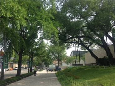 Urban Forests Could Offer Respite from Sweltering Summers