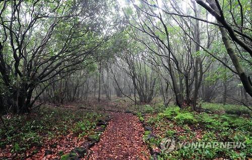 Taewoori-gil in Jeju Gotjawal Provincial Park.