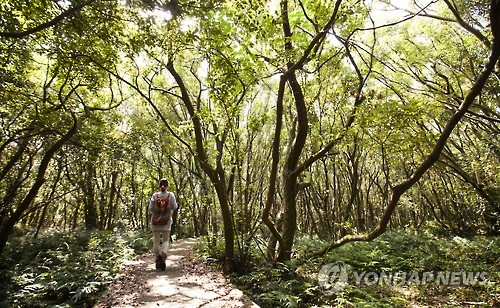 Breathe in Fresh Oxygen at the 'Lungs of Jeju'