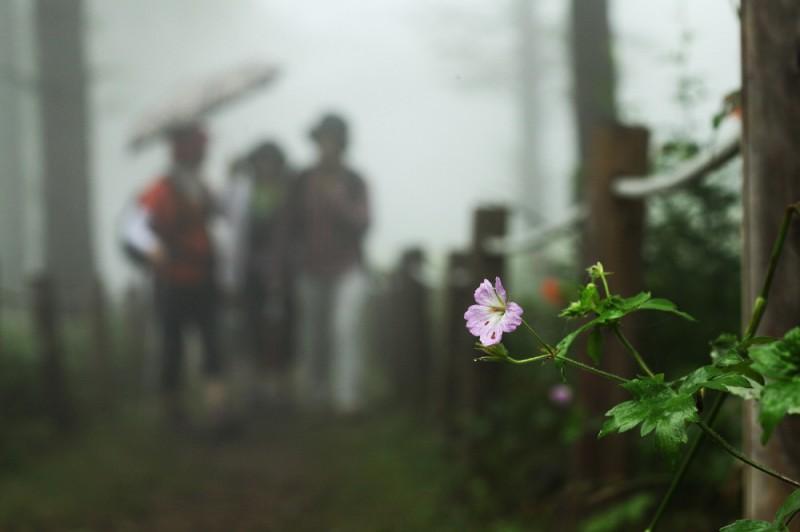 Flower Festival Opens at Korea's Largest Wild Flower Habitat on August 1