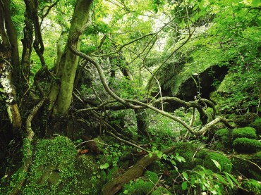 Gotjawal, Jeju's Primitive Forest, to be Protected by Special Law