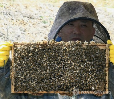 Cheongyang County Successfully Develops New Bees with Superior Honey Collection Ability