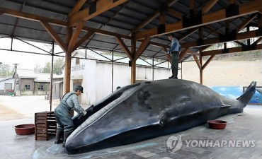 Restored Whaling Village Gains Popularity amid MERS Fear