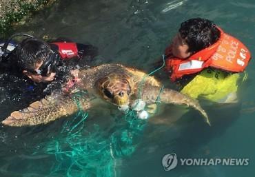 Endangered Loggerhead Turtle Rescued