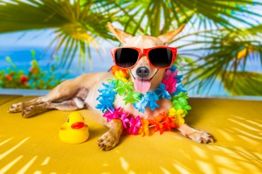 Sales of Pet Products Soar as Pets Go on Vacation