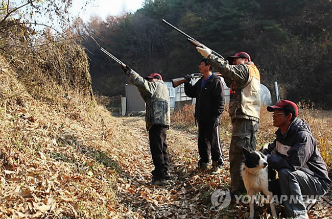 The agency has introduced two time schedules to borrow and return firearms, during the day from 5 AM to 9 PM, and at night from 5 PM to 9 AM, as farmers need to deal with both diurnal and nocturnal wild animals. (image: Yonhap)