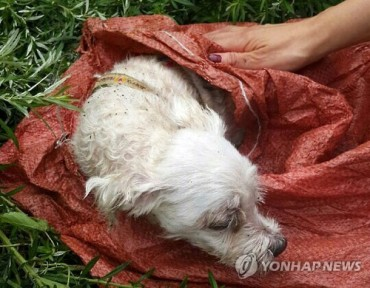 Puppy Rescued After Being Buried Alive