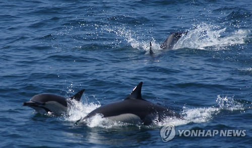 Unmanned Helicopters to Find Whales in Ulsan