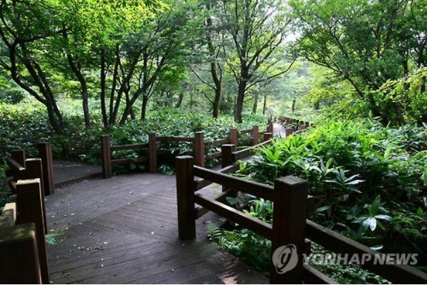 The Hall Eco-Forest provides a wide variety of amenities including 'woods bathing' places shown in this image. (image courtesy of Yonhap)