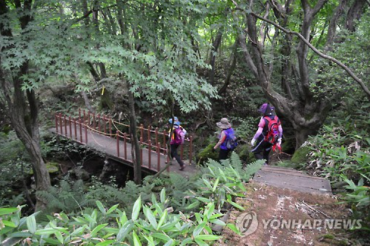 Halla Eco-Forest in Jeju Emerging as Must-go Travel Destination