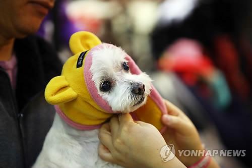 패션 강아지2