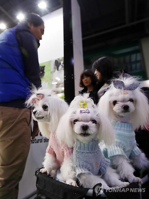 패션 강아지3