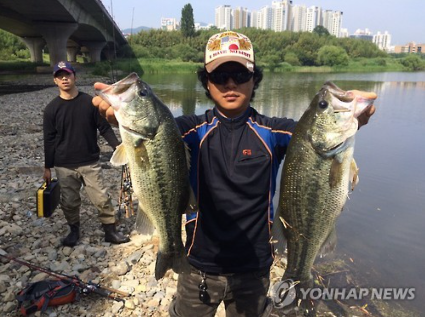 "The city of Ulsan held an event ""to eradicate Bass"" in July. (Image courtesy of Oh Yong-doo, provided by Yonhap)"