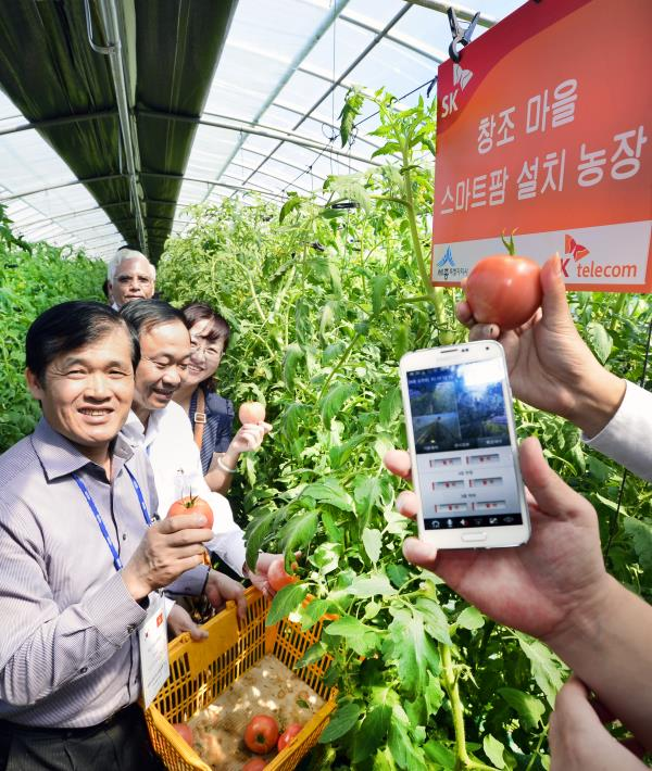 The smart farm technology allows farmers to remotely control devices within a grow room environment through a smartphone application. (image: SK)