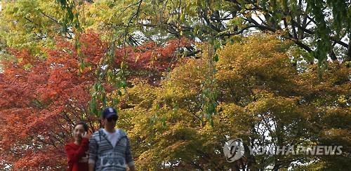 Autumn leaves in Namsan Mountain.