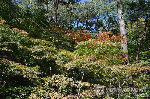 Autumn leaves of Songnisan National Park. A border of autumn leaves moving south should be present.