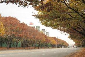 Autumn leaves near Anyangcheon.