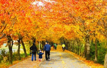 100 Different Ways to See Fall Leaves in Seoul