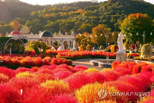 Redder Than Red: Everland's Kochia Festival