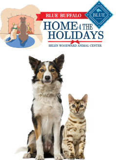 blue-buffalo-home-4-the-holidays-dog-cat